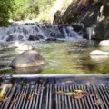 Water in Mauis Iao Stream doesnt make it past Wailuku Agribusiness diversion grate.