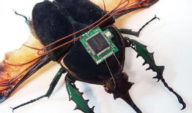 Insectos espía y otras fábulas de los medios españoles