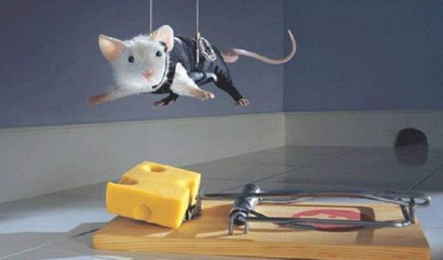 Los ratones pirómanos y la guerra santa anal