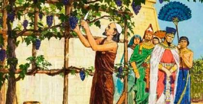 acab vinia