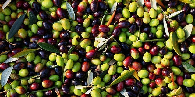 Patrimonio gastronómico judío y del Mediterráneo: aceitunas