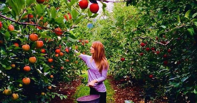 Cursos y manzanas