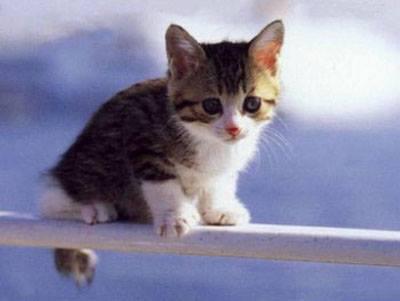 Prendete un gattino