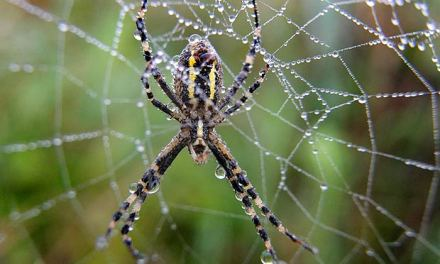La tela del ragno: le concessioni di Bergoglio