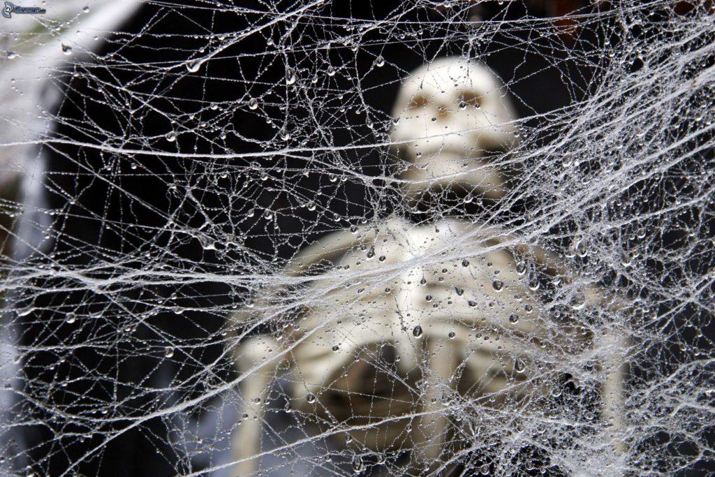 rugiada-su-una-tela-di-ragno,-scheletro-189655