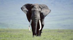Occhio per occhio, elefante per elefante
