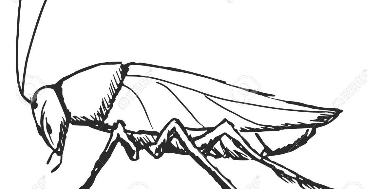 [ANTOLOGIA POETICA] Lo scarafaggio giornalista