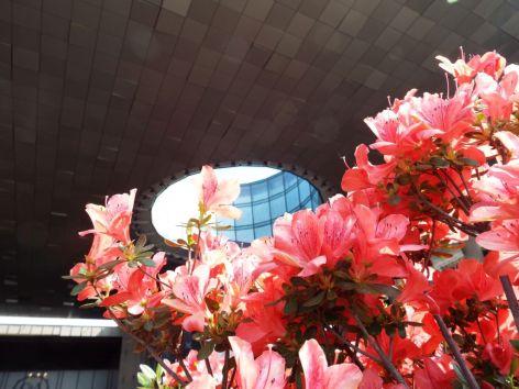flori la mall (7)