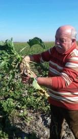cultivator sfecla de zahar (5)