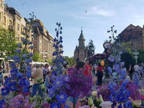 Timfloralis Piata Victoriei 2018 (12)