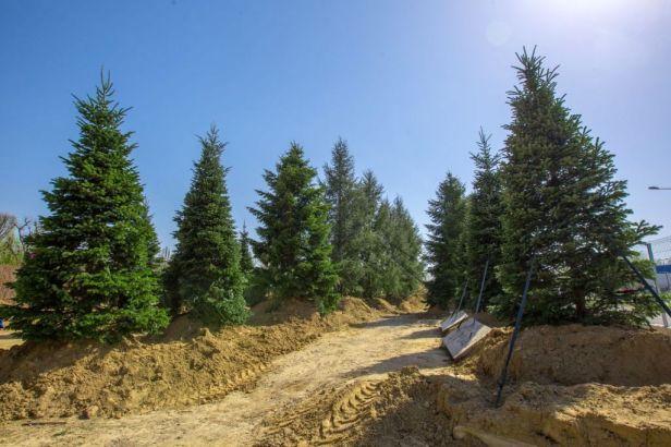 arbori parc openville (5)