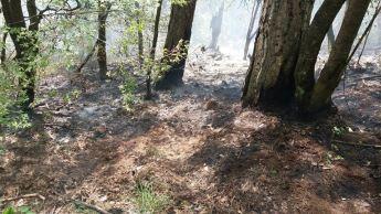 incendiu parc domogled 3