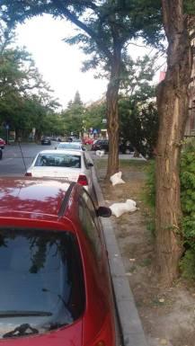 Loga parcare ilegala 1