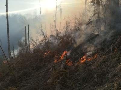 incendiu padure poeni (1)