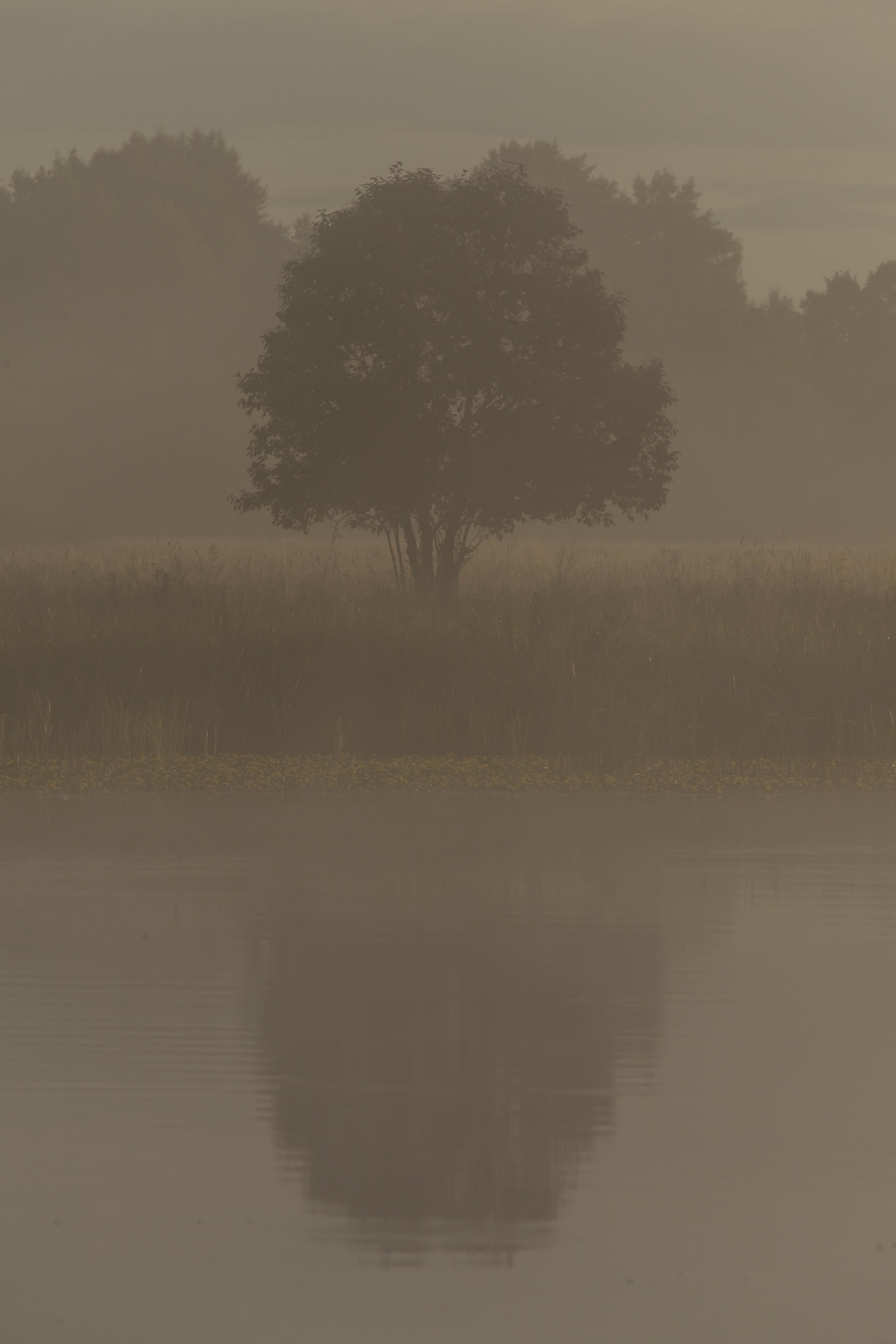 Julkalendern Lucka 14 Carita – Misty