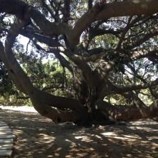 castello-alberi