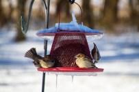 2016-11-19 Birds 34