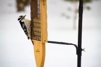 2016-12-17 Birds 115
