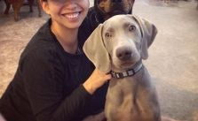 Sis & her fur babies! The puppies are staying over for Thanksgiving :) #dogsofinstagram #rottweiler #weimaraner #desertdashracestruckerhat [instagram]
