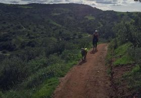 Sis showed me around her trails, but poor Kingston… He couldn't run much cos he had a tummy ache :( still a happy pup, tho! #dogsofinsta #weimaraner #weimaranersofinstagram #weimaraner_feature #trailrunning #ultratraining #racewithbase #nuunlife #orangecounty #sogreenhere [instagram]