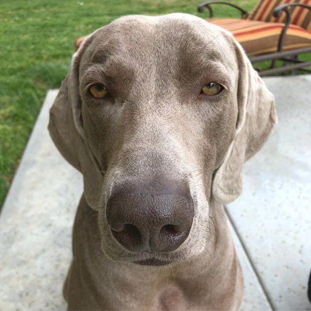 Cuddles. Now. – Kingston, the bourgeois doggo of Orange County