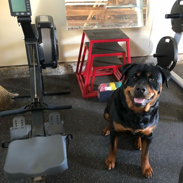 Hendrix: Welcome to the @hendrixandkingston Box. Warm up & then find your 1rm for the front squat.  #rottiegym