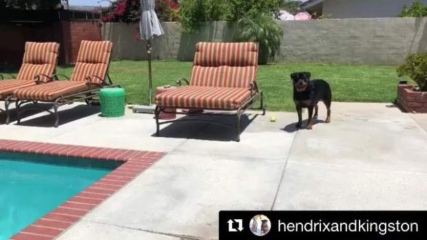 Sound on and watch 'til the end. .#Repost @hendrixandkingston with @get_repost・・・Wait for it. 😎🏾.(Best with)