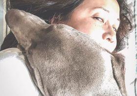 Current status 🤗……#weimaraner #weimlove #puppiesofinstagram #naptime #lazysunday [instagram]