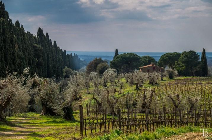 Zypressen, Wein & Olivenbäume