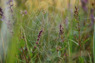 Spinnennetz im Naturschutzgebiet Greifensee