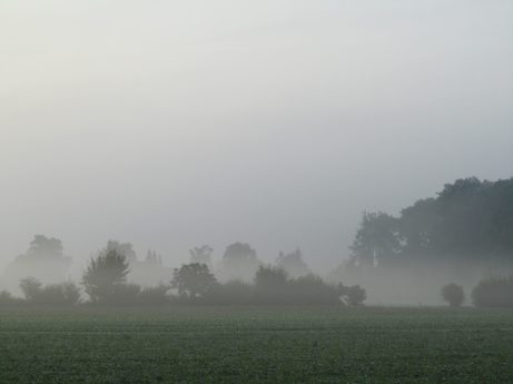 Buchs im Nebel