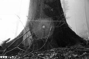 Spinnennetz im Nebligen Wald