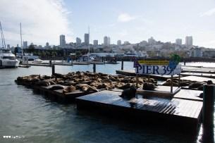 Sea Lions of pier 39, San Francisco