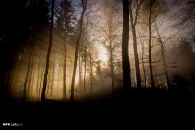 Wenn die Sonne durch den Nebel drückt