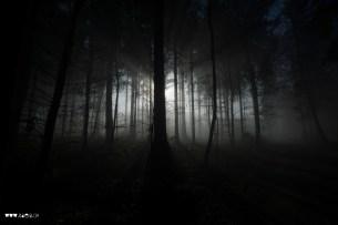 Dunkler Herbstwald