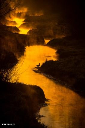 Goldener Furtbach