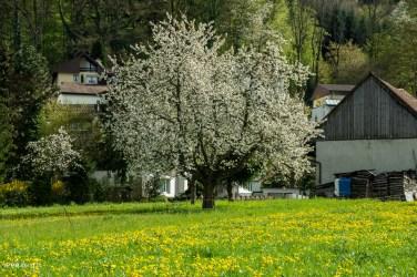 Blühende Bäume