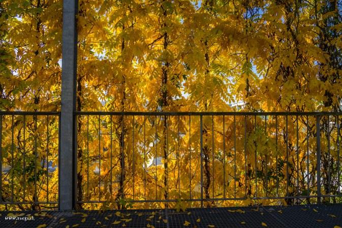 MFO Park Blätterwand