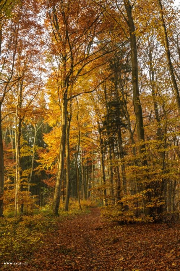 Laub im herbstlichen Wald