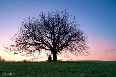 Rägi sitzt unter einem Kirschbaum