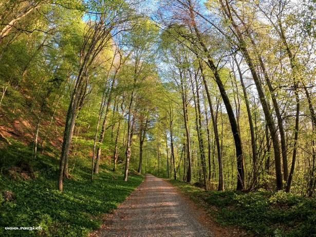 Waldstrasse im Frühling