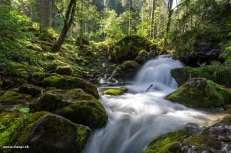 der wilde Sulzbach