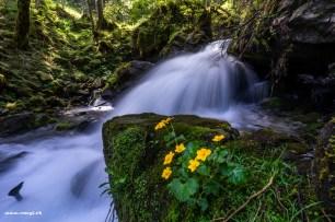 Bachbombel vor Wasserfall