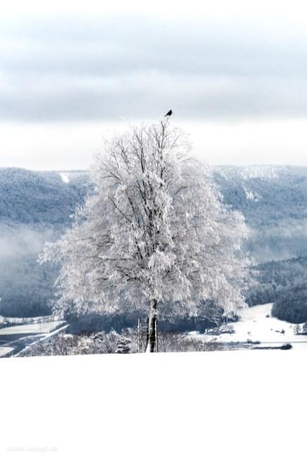 Baum auf dem Sennenberg
