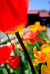 HOA_rafting_hokkaido_flowers_1000px-01-2