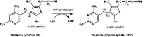 thiamin pyrophosphate formation