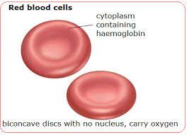 Hemoglobulin