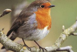 Big Garden Bird Watch @ Real Life Science Studio, John Hope Gateway   Scotland   United Kingdom