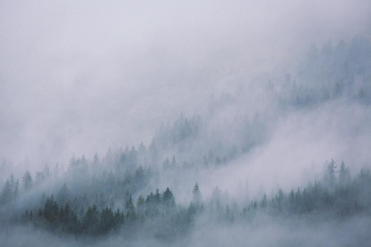 Undercover. #seward #alaska #fog #winter