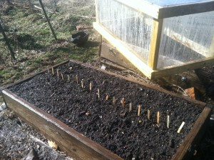 Spring Seed Bed